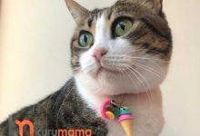 Kedi Tasmaları Nasıl Seçilmeli? Kullanışlı Kedi Tasması Modelleri