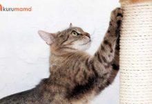 Kedi Tırmalama Tahtası Seçerken Dikkat Edilmesi Gerekenler