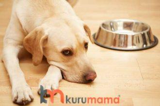 Her Mamayı Yemeyen Köpekler İçin Tavsiyeler: EN LEZZETLİ Köpek Mamaları