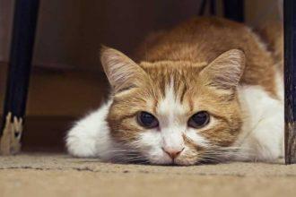En ölümcül 5 kedi hastalığı