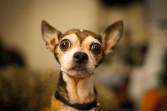 Evcil Hayvan Besleme Kuralları