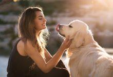 Evcil hayvanlarınız için yem ve mamalar