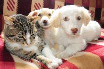 Evcil hayvanlar için yaz önerileri