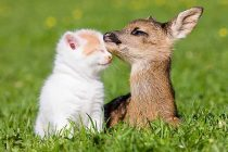 Evcil Hayvanların Gizli Yaşamı