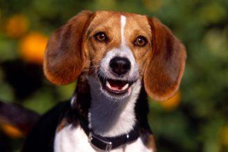 Hamile ve emzirme dönemindeki köpeklerde hangi mama kullanılmalıdır?
