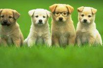 Hamile Köpeklerde Beslenme