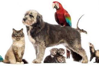 Evde farklı hayvanlar bir arada beslenebilir mi?