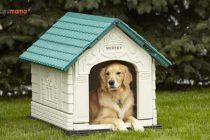 Köpek Kulübesi Nasıl Seçilir? En İyi Köpek Kulübesi Modelleri