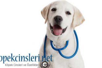 Köpeklerin Sağlıklı Yaşam Sürdürmesi İçin Gerekli Olan 8 Vitamin