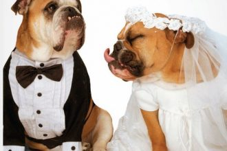 Köpeklerde Cinsiyet Ayrımı Nasıl Yapılır? Köpek Özellikleri