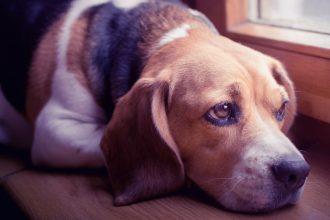 Köpeklerde Parazit Neden Oluşur ? Parazit Tedavisi