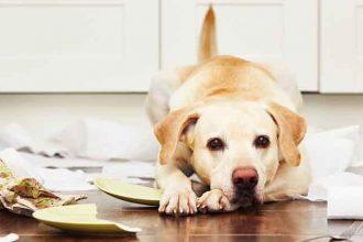 Köpeklerde Stres Nedenleri Nelerdir?