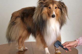 Köpeklerde Tüy Bakımı Nasıl Yapılır?