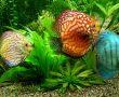Balık yeminde kalite arayanlar