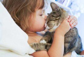 Kediniz aslında sizi çok seviyor