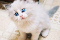 Kedi Köpeklerde Ağız Sağlığı ve Bakımı