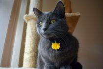 Kediler İçin Aksesuar Seçimi Nasıl Olmalı ?