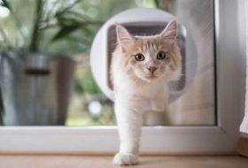 Kedilerin Özgürlüğüne Kavuşması İçin En İyi 5 Kedi Kapısı