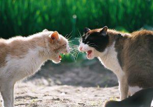 Agresif Kedilere Karşı Nasıl Davranılmalıdır?