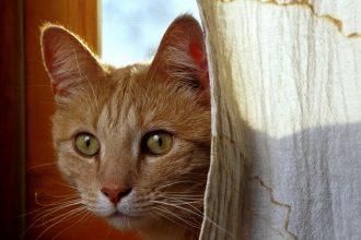 Kedilerin kısırlaştırılması ile ilgili bilgiler