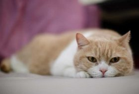 Kedimi kısırlaştıracağım ama sorun olur mu acaba?
