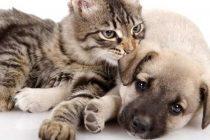 Hayvanlar İlgi İster