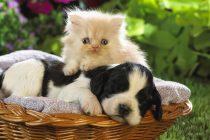 Kedilerle köpekler gerçekten düşman mıdır?