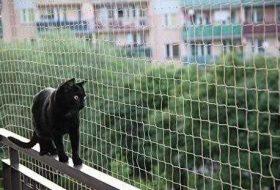 Kedi Koruma Ağı Ne İşe Yarar? Yüksekte Oturan Kedilerin Güvenliği Nasıl Sağlanır?