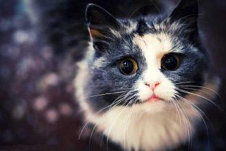Kedi Maması İçerisinde Neler Var?