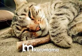 Matatabi: Kedileriniz İçin En Güzel Hediye — Matatabi Nedir?