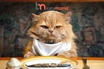 Kedi Beslenmenin En Pratik Yöntemi: En İyi Otomatik Mama ve Su Kapları