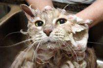 Kedilerinizin Güzel Kokması İçin En İyi 5 Kedi Şampuanı