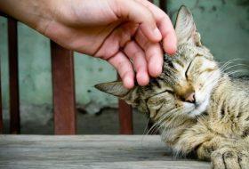 Kediler hakkında bilmedikleriniz