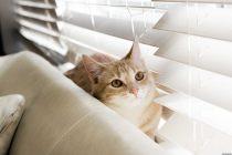 Tüy Toplama Eldiveni: Kedilerde Tüy Bakımı İçin En Basit Yöntem