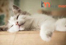 Kedilerinizi Rahat Ettirecek En İyi Konforlu Kedi Yatağı Modelleri