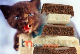 Kediler Çikolata Yiyebilir Mi? Kedilerde Çikolata Zehirlenmesi