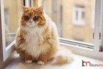 Kilolu Kediler İçin EN İYİ 5 Diyet Kedi Maması