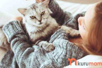 Kedilerin Tüy Bakımı İçin Üretilen EN İYİ 5 Tarak ve Fırça Modeli