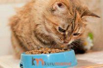 Kedilerin Beslenmesi İçin En İdeal Kedi Mama ve Su Kabı
