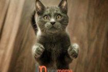 Kedinizin Bağışıklık Sistemini Güçlendirin: Kediler İçin En İyi 8 Vitamin