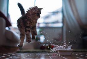 Kediler Suyu Sever mi?