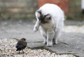 Kediler ve Kuşlar