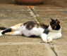 Kediler Neden Böcek Avlar?