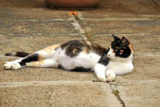 Kediler En Erken Ne Zaman Hamile Olabilir? Nasıl Beslenmelidir?