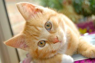 Kedilerde bakımın önemi