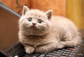 Sağlıklı Kedi Bakımı İçin Öneriler Ve Yapılması Gerekenler