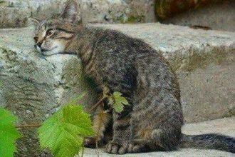Kedilerde İştahsızlık Nedir? Nasıl Tedavi Edilir?
