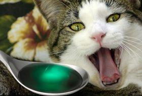 Kedilere İlaç Nasıl İçirilir?