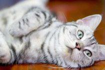 Kedileri Sosyalleştirmenin 6 Etkili Yolu — Kedileri Eve Alıştırmak