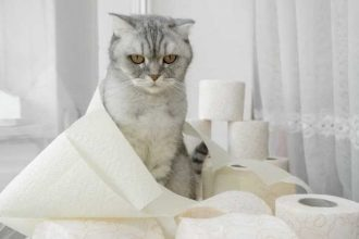 Kedilerde İshal Nedenleri ve Tedavisi